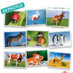 Képsorozatok - állatok