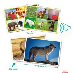 Természet és állatok